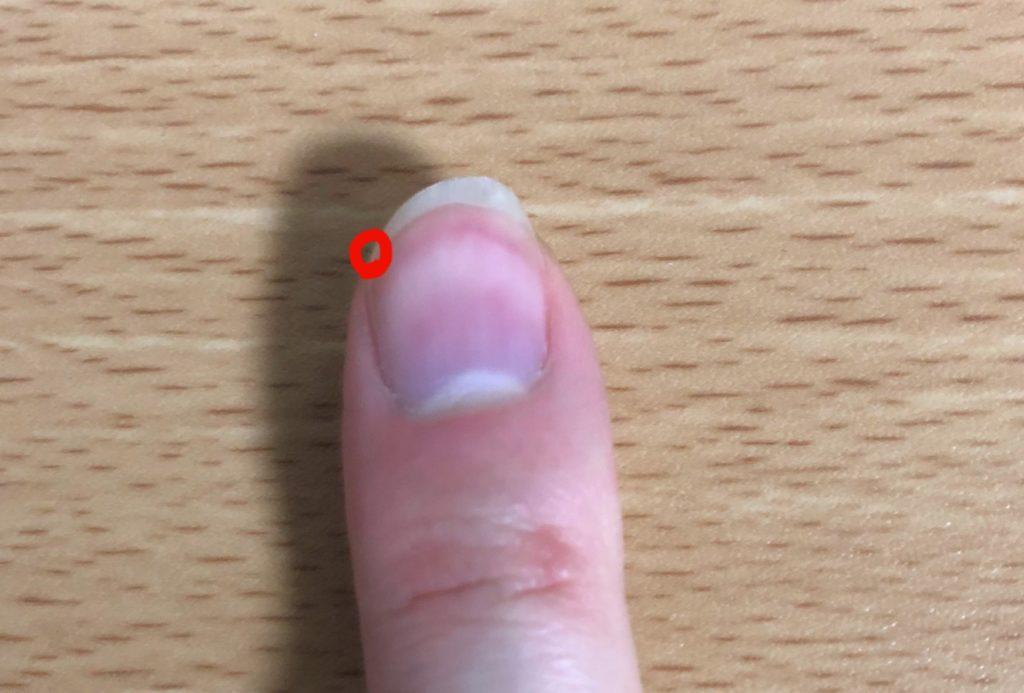 爪と肉の交点で弦を捉える